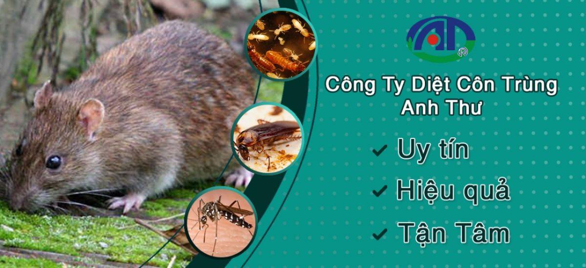 Dịch vụ diệt chuột chuyên nghiệp tại TPHCM