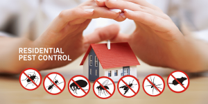 Công ty dịch vụ diệt côn trùng Tây Ninh