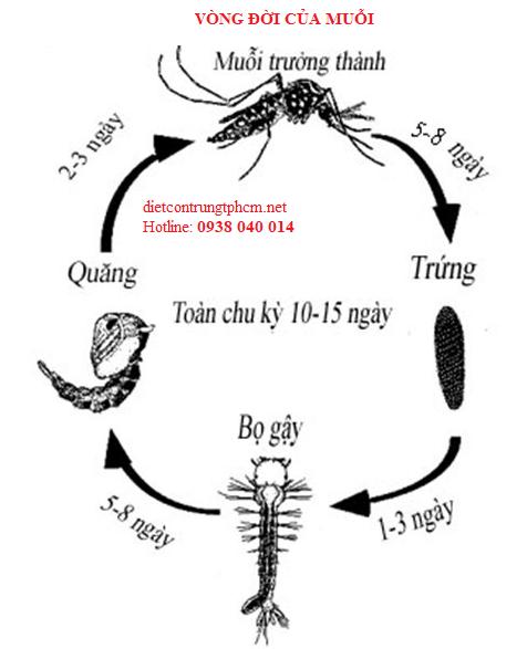 dịch vụ diệt muỗi chuyên nghiệp TPHCM