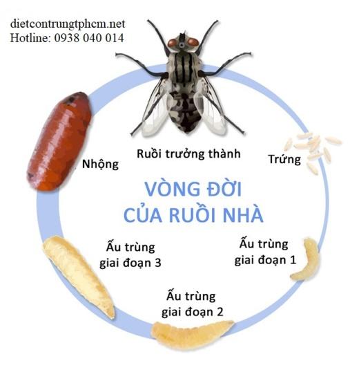 Dịch vụ diệt ruồi chuyên nghiệp