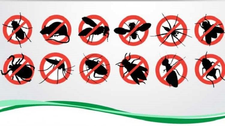 Bán thuốc diệt côn trùng ở Tây Ninh
