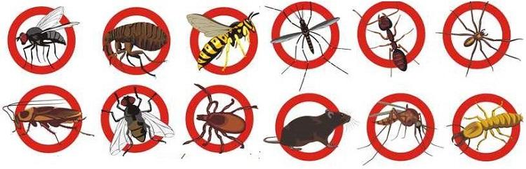 Công ty dịch vụ diệt côn trùng Anh Thư TPHCM