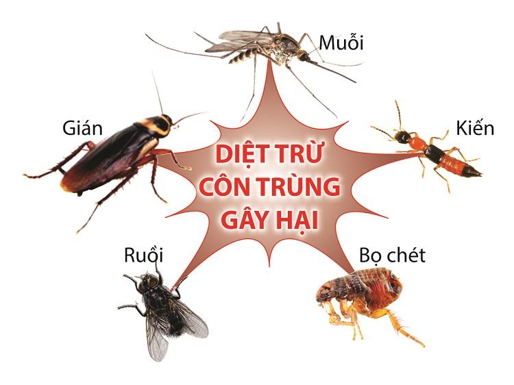 Công ty dịch vụ diệt côn trùng chuyên nghiệp Anh Thư tại TPHCM