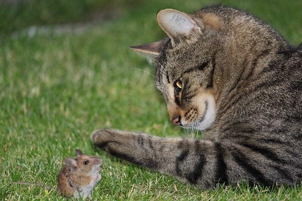 Cách phòng và diệt chuột với chó mèo - Diệt côn trùng Anh Thư