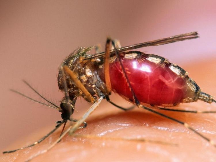 Những hình ảnh đẹp ngộ nghĩnh về các loài côn trùng - Diệt côn trùng Anh Thư TPHCMNhững hình ảnh đẹp ngộ nghĩnh về các loài côn trùng - Diệt côn trùng Anh Thư TPHCM