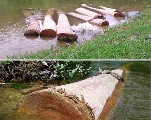 ngấm gỗ trong nước