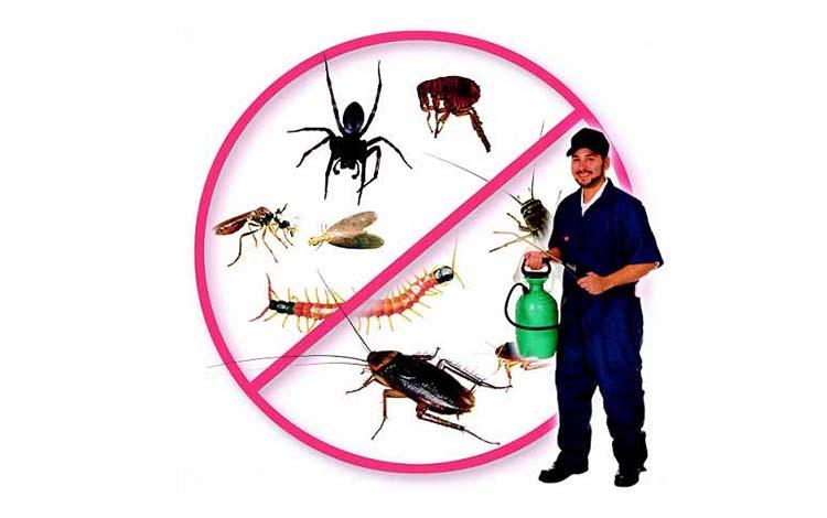 Công ty dịch vụ diệt côn trùng An Giang
