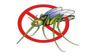 Công ty dịch vụ diệt côn trùng Tiền Giang