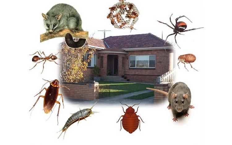 Công ty dịch vụ diệt côn trùng tại Đồng Tháp