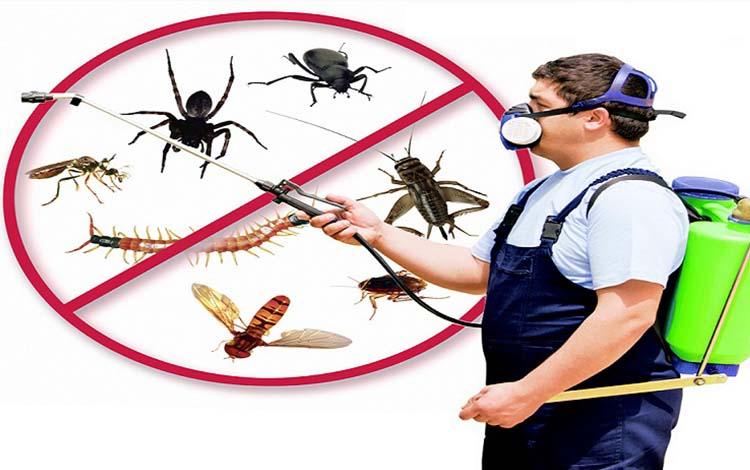 Công ty dịch vụ diệt côn trùng Cần Thơ