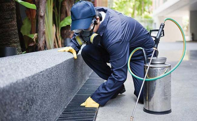 Công ty diệt côn trùng Anh Thư - dietcontrungtphcm.net cover image