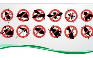 Công ty dịch vụ diệt côn trùng Hậu Giang