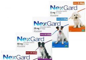Top 8 thuốc diệt ve chó hiệu quả nhất hiện nay