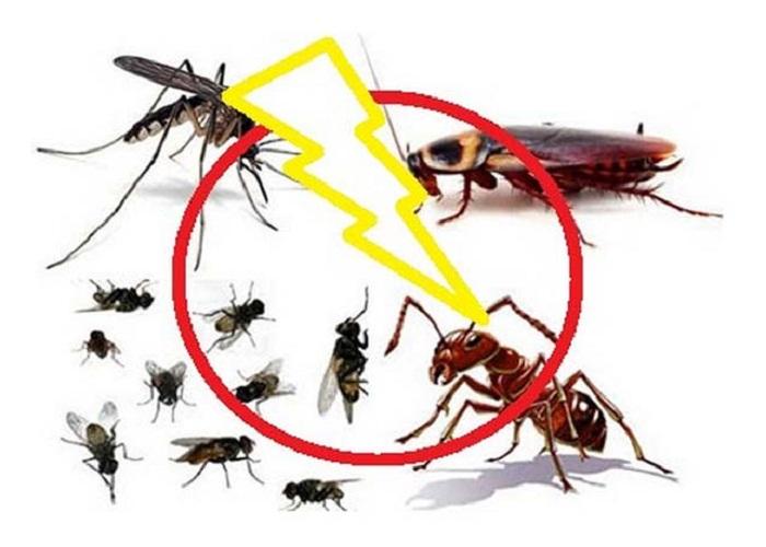 Công ty dịch vụ diệt côn trùng tại nhà giá rẻ Bắc Giang
