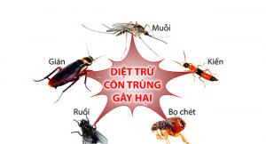 Những cách diệt côn trùng trong nhà vệ sinh tốt nhất