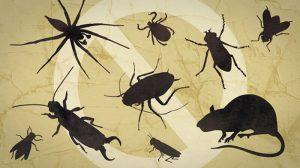 Công ty dịch vụ diệt côn trùng Bình Định
