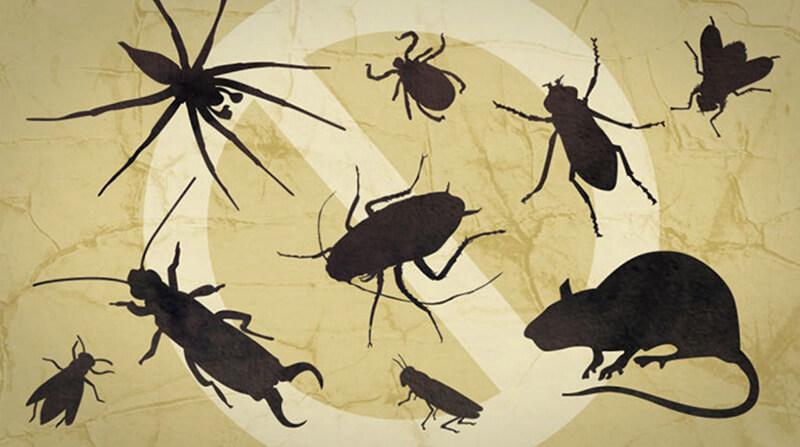 Công ty dịch vụ diệt côn trùng giá rẻ tại Bình Định
