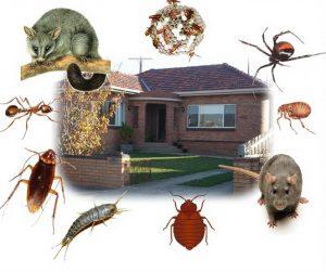 Công ty dịch vụ diệt côn trùng Bình Thuận