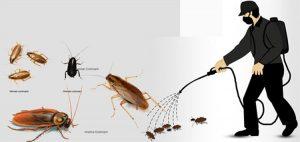 Công ty dịch vụ diệt côn trùng Cao Bằng