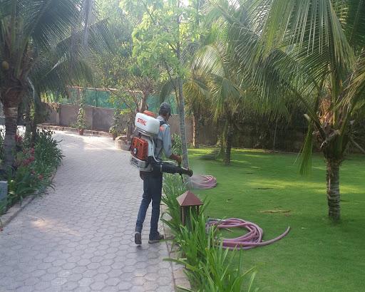Công ty dịch vụ diệt côn trùng giá rẻ tại Điện Biên