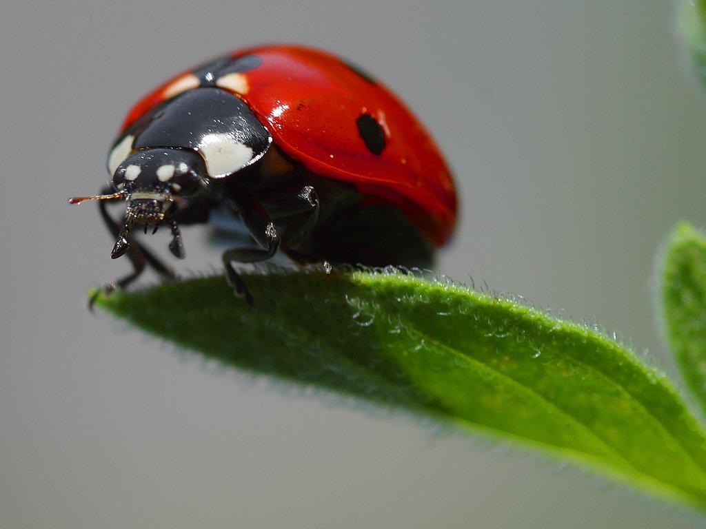 Các loại côn trùng có lợi cho cây trồng và con người