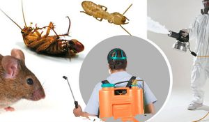 Công ty dịch vụ diệt côn trùng Sơn La