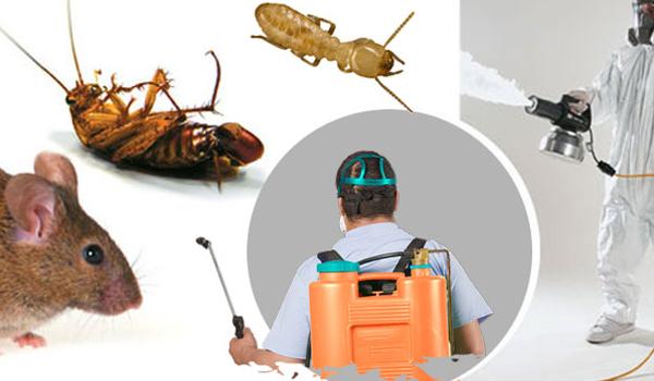 Công ty dịch vụ diệt côn trùng tận gốc tại Sơn La
