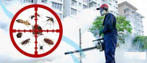 Công ty dịch vụ diệt côn trùng Thái Nguyên