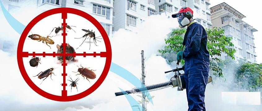 Công ty dịch vụ diệt côn trùng tận gốc tại Thái Nguyên
