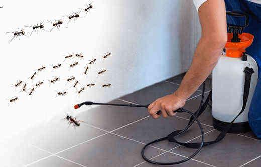 Công ty dịch vụ diệt côn trùng tận gốc tại Tuyên Quang