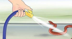 Tổng hợp những cách đuổi rắn ra khỏi nhà hiệu quả nhất