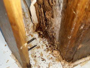 Làm thế nào để diệt mọt gỗ hiệu quả và an toàn nhất