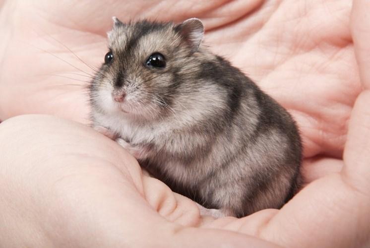 Chuột chù – Những sự thật về chuột chù bạn cần biết