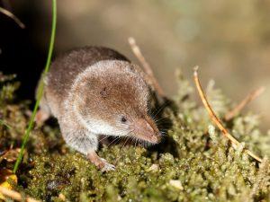 Cách diệt chuột ngoài đồng an toàn với đất và cây trồng