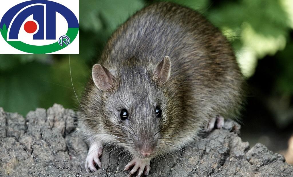 Cách đuổi chuột bằng bình xịt muỗi-1