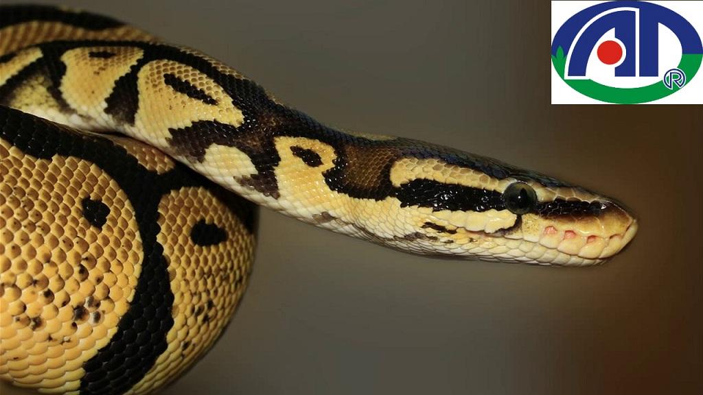 Cách ngăn chặn rắn vào nhà