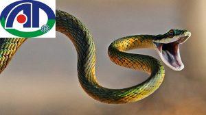 Những cách ngăn chặn rắn vào nhà hiệu quả nhất