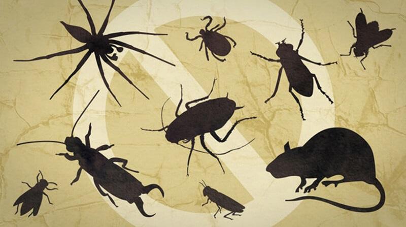 10 cách diệt côn trùng trong phòng ngủ tự nhiên an toàn